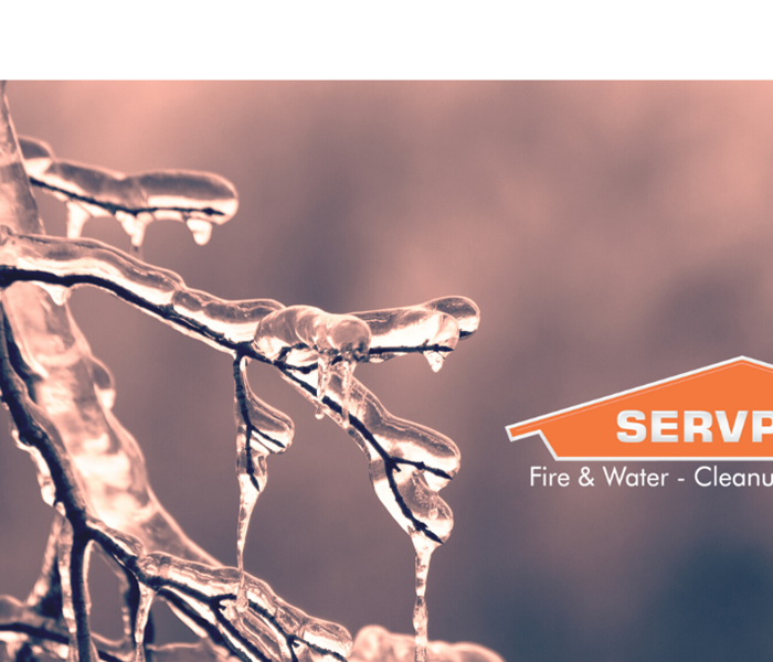 SERVPRO logo with frozen tree branch