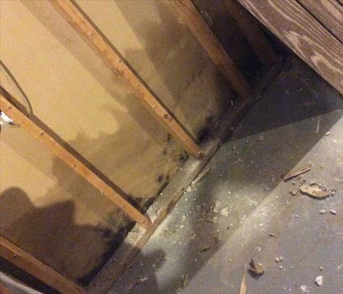 Mold Remediation Fighting Mold in Your Edwardsburg, MI Home